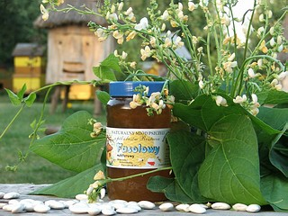 miód fasolowy z Roztocza, produkt tradycyjny