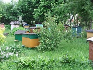 Zabytkowe ule w prywatnym skansenie pszczelarstwa.