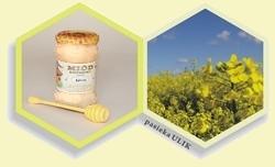 miód pszczeli rzepakowy kremowy z pasieki Ulik