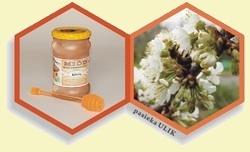 miód pszczeli wielokwiatowy kremowy z pasieki Ulik na Roztoczu