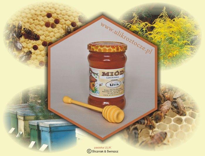 naturalny miód pszczeli nawłociowy z pasieki ULIK na Roztoczu