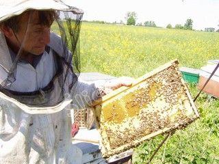 Pszczelarz trzyma ramkę z miodem