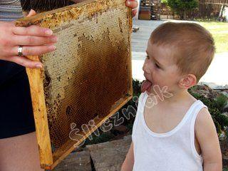Dziecko liże plaster miodu