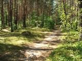 Szlak turystyczny leśny w Zwierzyńcu.