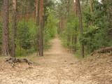 Szlak turystyczny nad stawami Echo w Zwierzyńcu.